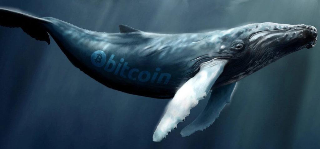 биткоин кит