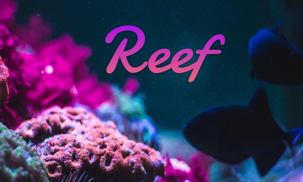 Reef на Binance